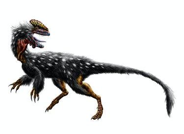 The crowned dragon Guanlong wucaii from the Late Jurassic (160 mya) of China.