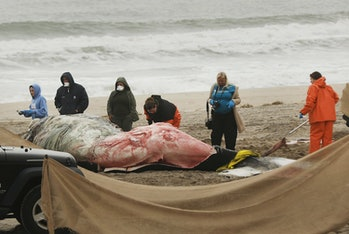 Whale Death Marine Biology