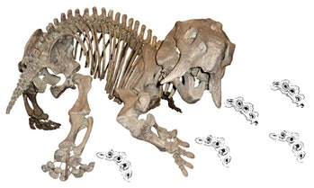 fossils, dicyondont