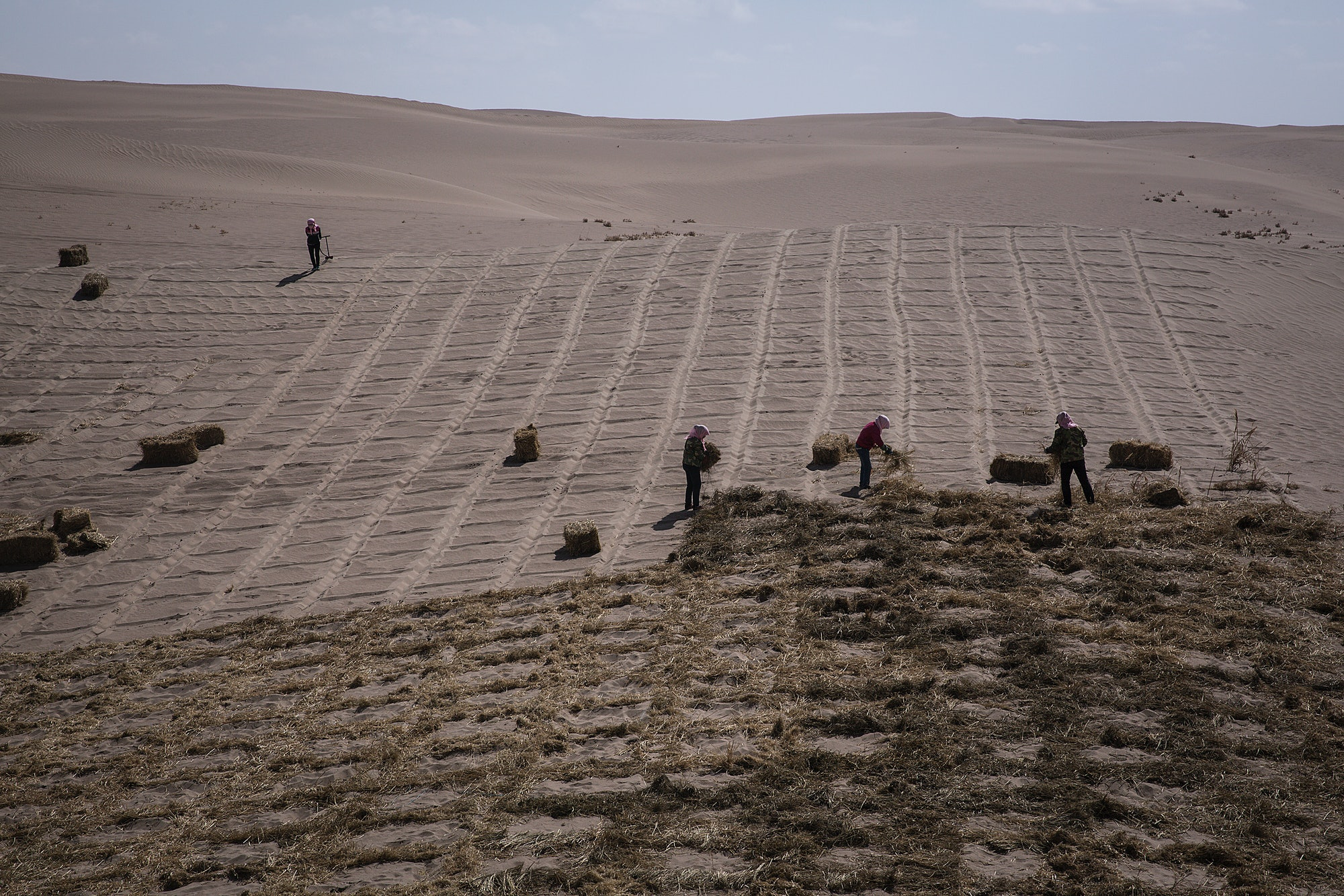 In China, women are planting grass-checkered sand barriers to prevent climate change-induced desertification.