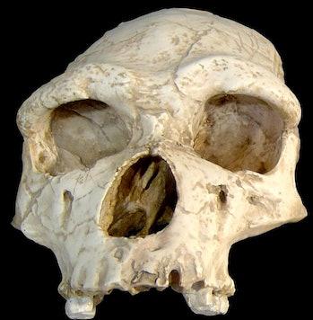 homo erectus human migration genetics