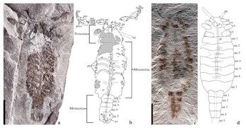 prehistoric scorpion