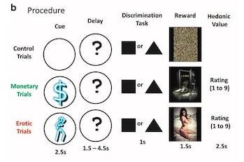 porn study methods