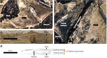 Jianianhualongtengi fossils