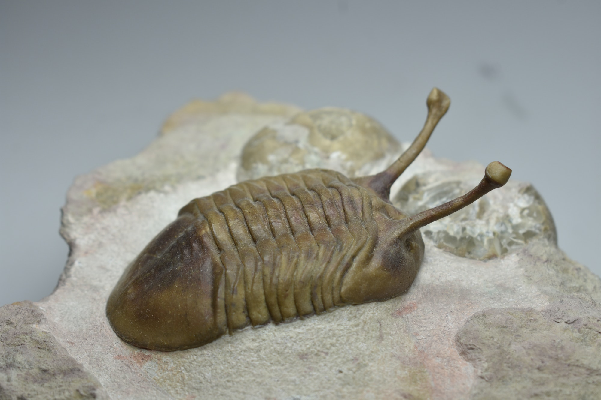 Marine organisms like trilobites proliferated during the ice age that came after the asteroid's dust cloaked Earth.