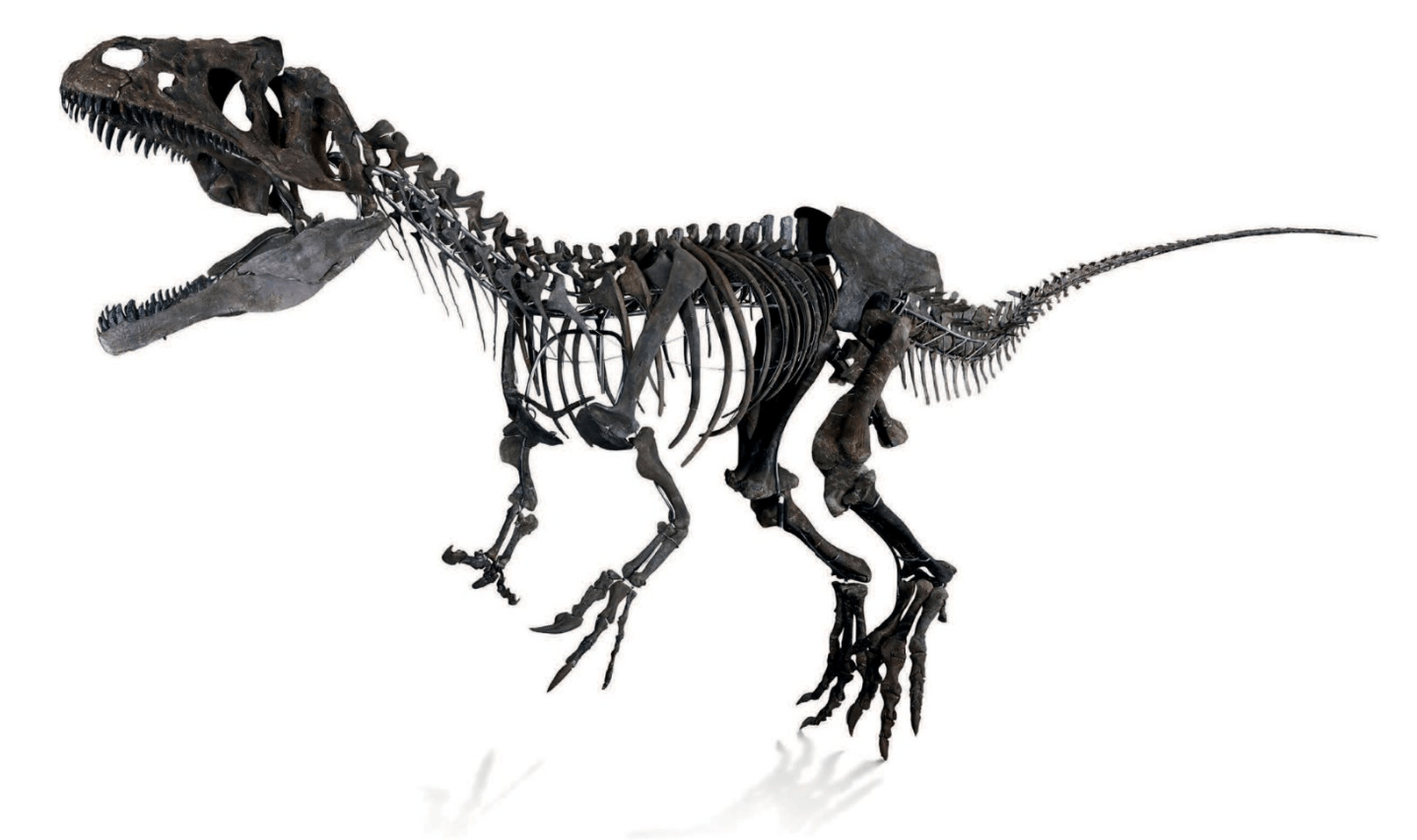 unidentified dinosaur sold at auction
