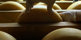Scientists Design Genetic Tool To Make Perfect Cheese Every Time