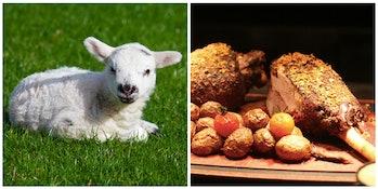 lamb and lamb chops
