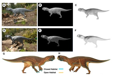 A model of 'Psittacosaurus' shows ideal countershading for open and shaded environments.