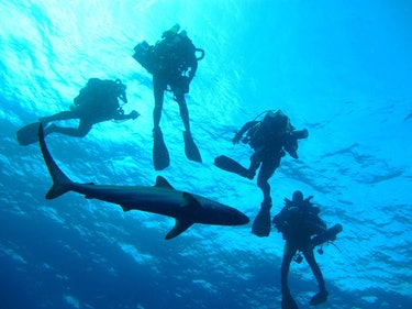 During the Coral Ecosystem Connectivity 2013 expedition off the coast of Florida, the technical dive team often received visitors during decompression stops. This time a silky shark came in close to pose with the group.