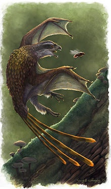 Restoration of the membrane-winged scansoriopterygid Yi qi