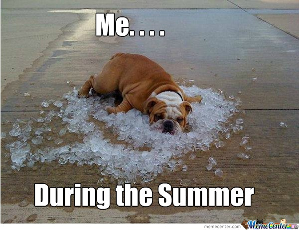12 Funny Summer Memes That Will Make You See The Season Differently