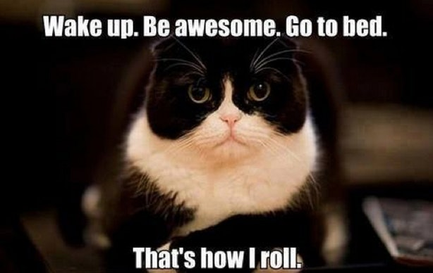 Funny Cat Memes: 14 Cat Memes That Will Help You Celebrate The Best Day Of