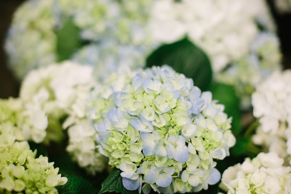 Inexpensive Wedding Flowers | 16 Inexpensive Wedding Flowers That Still Look Beautiful For Couples
