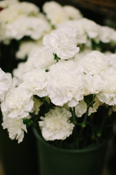 16 inexpensive wedding flowers that still look beautiful for couples carnations get a bad rap sometimes but they are a perfect filler for many a wedding arrangement when mixed in with more expensive flowers of a similar mightylinksfo Image collections