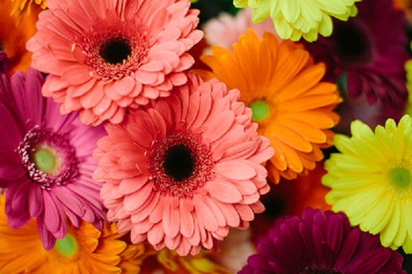 16 Inexpensive Wedding Flowers That Still Look Beautiful For Couples ...
