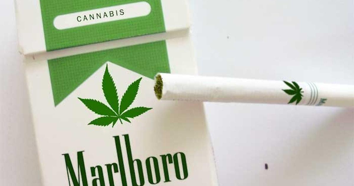 Марихуана или сигареты обои на рабочий стол с марихуаной и девушкой