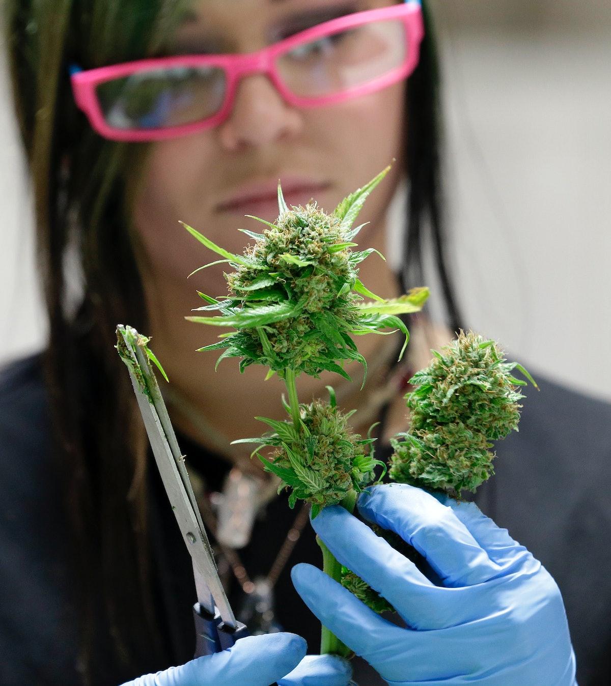 Она выглядит как фото марихуана конопли желтеют листья если ростки