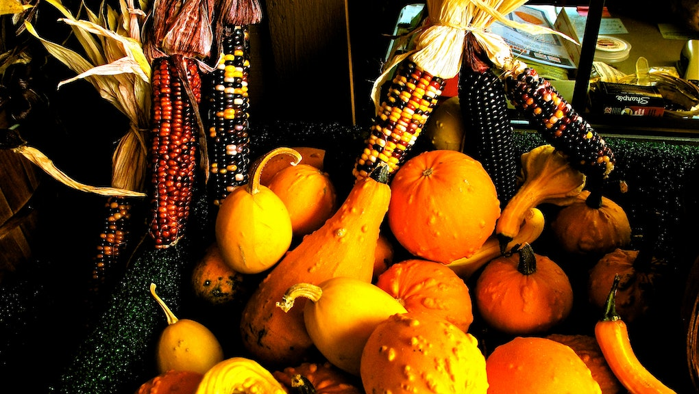 Can You Eat Decorative Gourds The Answer To The Question You Never