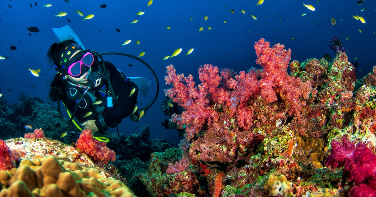 What to know about getting scuba certification so you can explore the underwater world