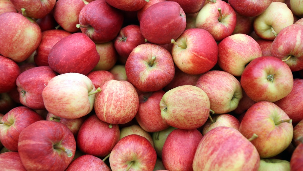 Where To Go Apple Picking In The Northeast This Fall