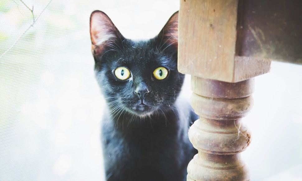 Why Are Black Cats A Halloween Symbol Heres The History Behind