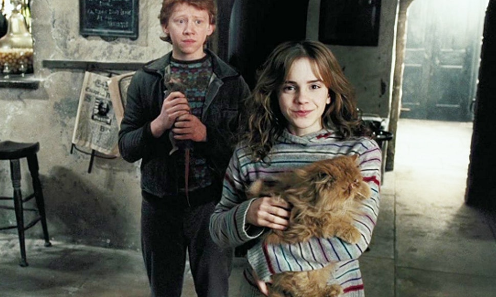 Hermione and Crookshanks by Leonie-Heartilly on DeviantArt  |Harry Potter Hermione And Crookshanks