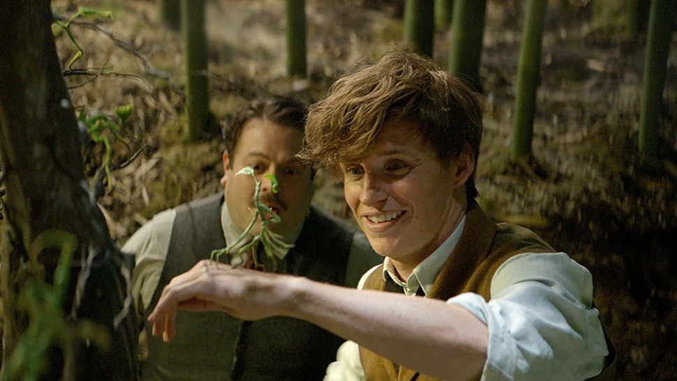Is Newt Scamander Related To Anyone From Harry Potter? The