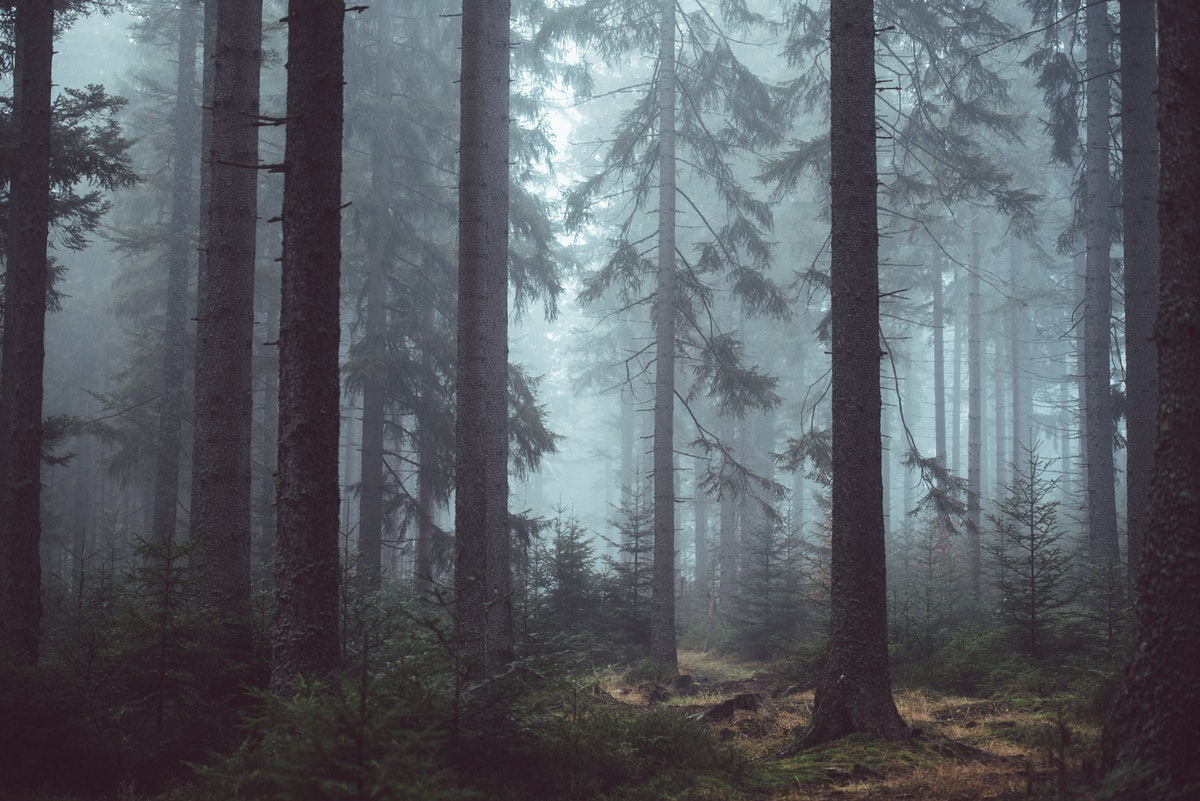 These Creepy Camping Stories From Reddit Might Make You Never Want To Go Outside Again