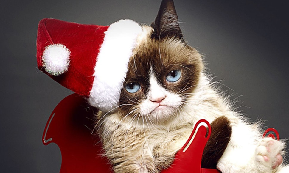 Lifetimes grumpy cat movie trailer is here its really grump lifetimes grumpy cat movie trailer is here its really grump tastic video thecheapjerseys Choice Image