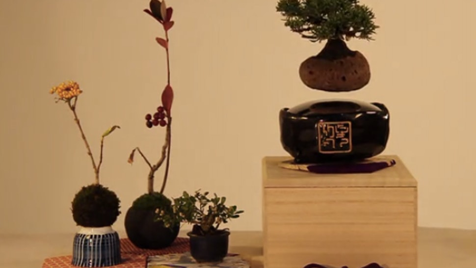 What Are Floating Bonsai Trees? Everything You Need To Know About