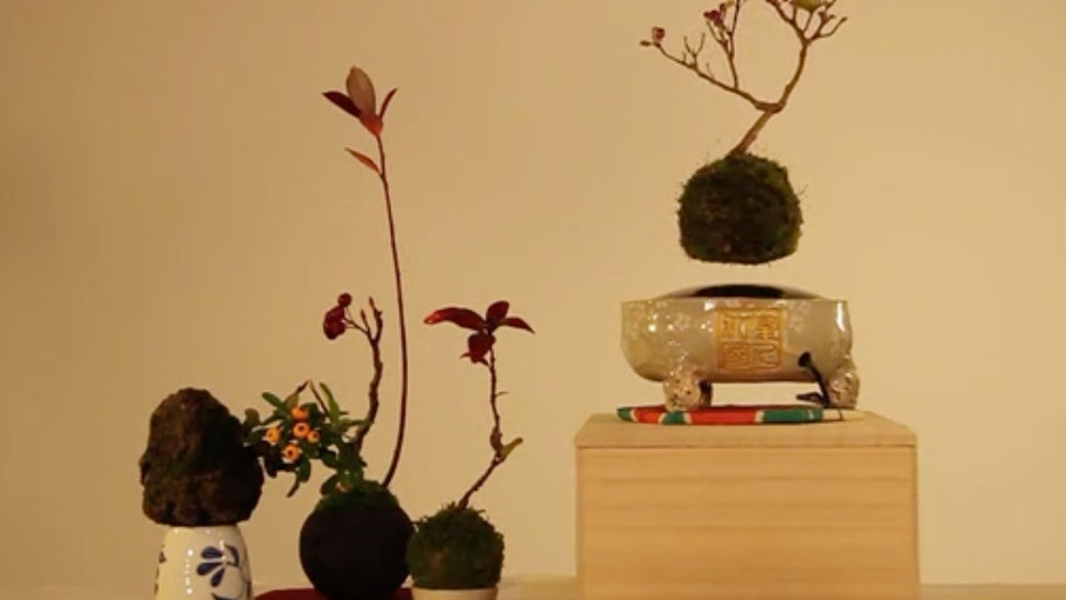 How Do Floating Bonsai Trees Work? It's All To Do With The
