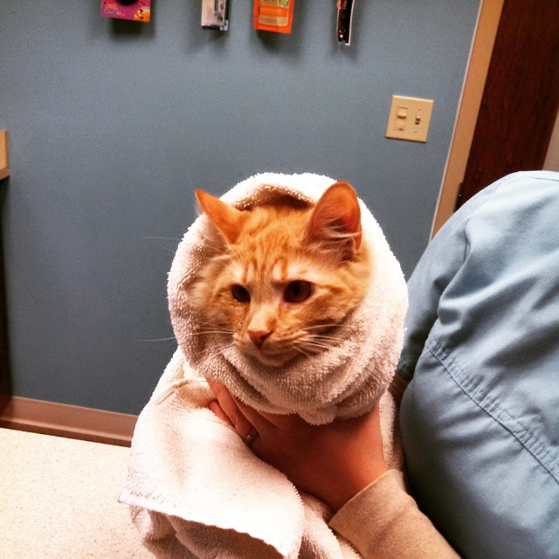 Purritos 22 Times When Cats Became Burritos Who Just Want To Snuggle With You If You Don T Eat Them First Photos