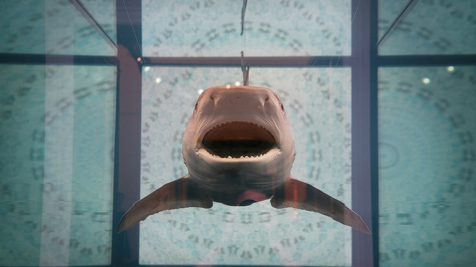 Sharks Have Personalities Too, From 'Shark Tale' Lenny Types To That