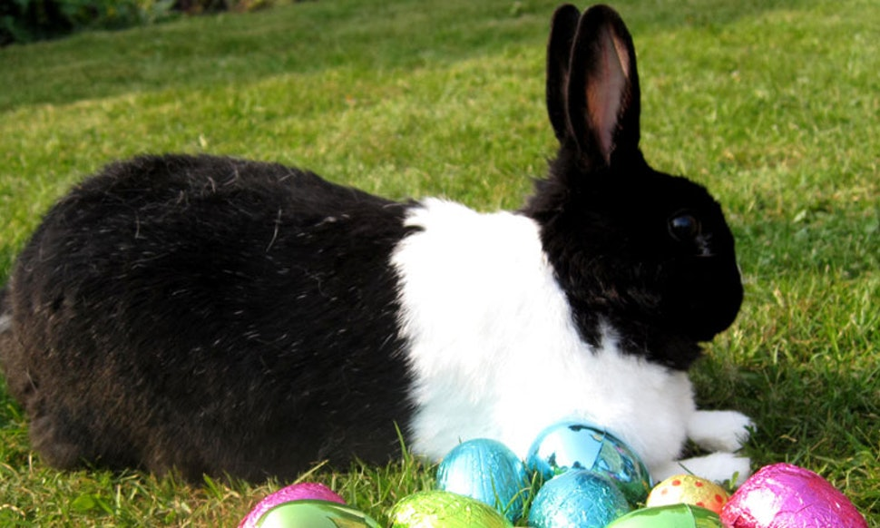 11 Books Involving Rabbits Thatll Get You Excited For The Arrival Of Easter Bunny