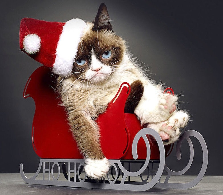Is Grumpy Cat Really Grumpy? \'Grumpy Cat\'s Worst Christmas Ever ...