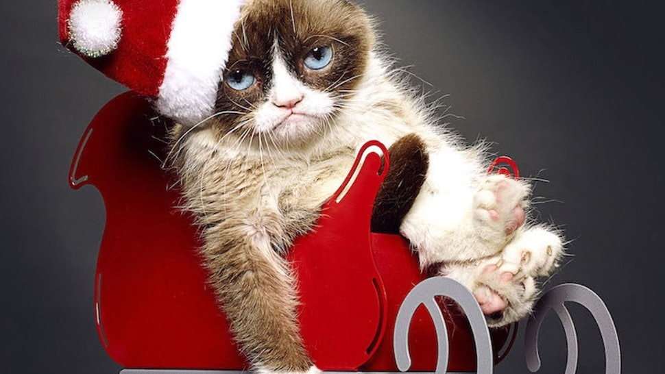 Is Grumpy Cat Really Grumpy? 'Grumpy Cat's Worst Christmas Ever' Star Evan Todd Dishes on Working with the Famous Feline