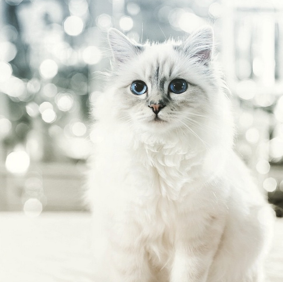 Image result for pictures of choupette