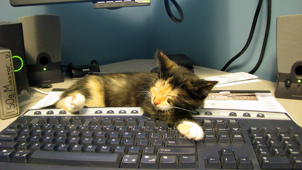 napping at work is really good for your productivity experts say