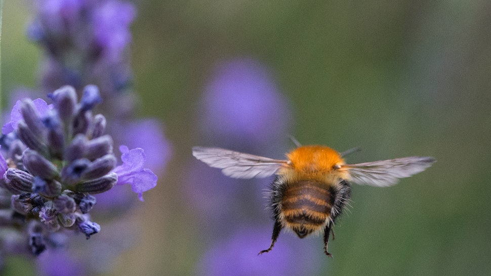 Nervous About Bee Population Decline? Here Are 9 Simple ...