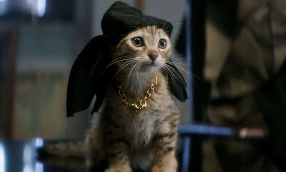 Can You Adopt The Kitten From Keanu Cat Is Way Too Adorable For Words