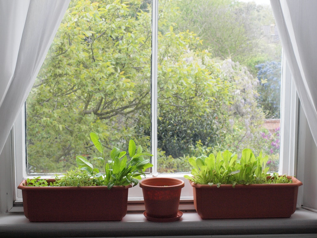 The 3 Best Herbs For Windowsill Gardens Because Even College
