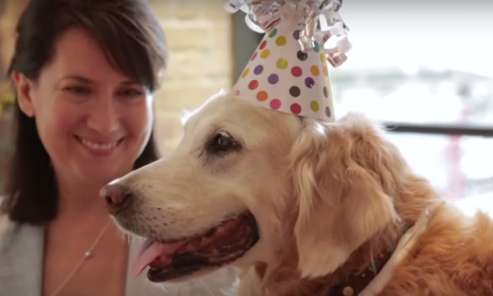this 9 11 rescue dog celebrating her birthday like a king will make