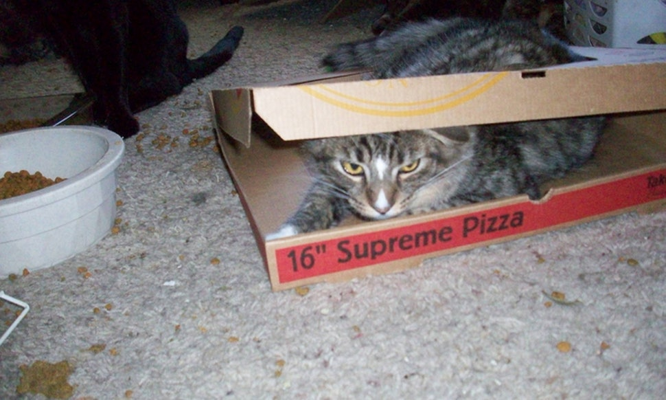 Luci I M Not A Cat Disenchantment