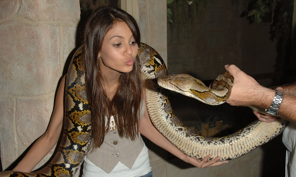 This Documentary Will Show An Anaconda Eating A Man Alive
