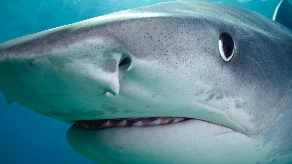 16 Weirdest Things Ever Found Inside A Sharks Stomach