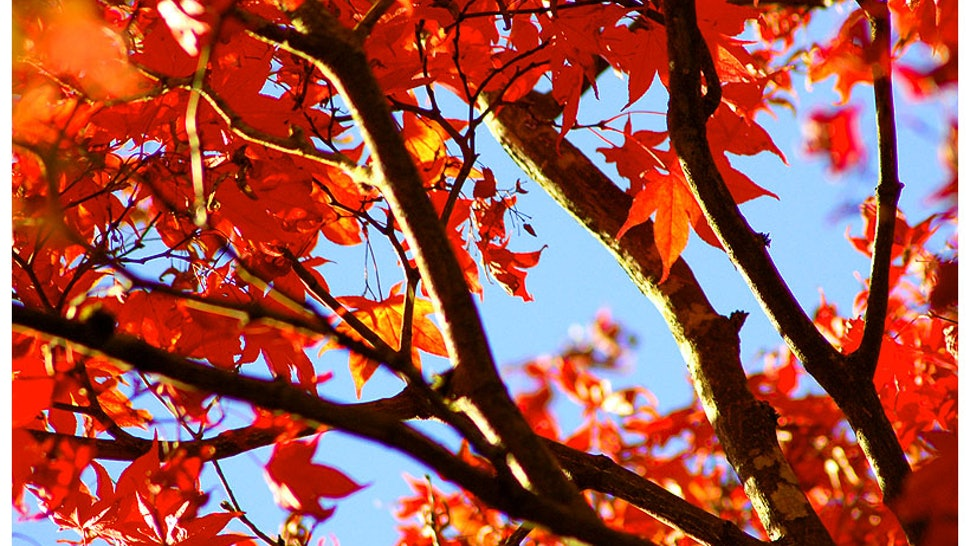 Why Do Leaves Change Color in the Fall? SciShow Explains the
