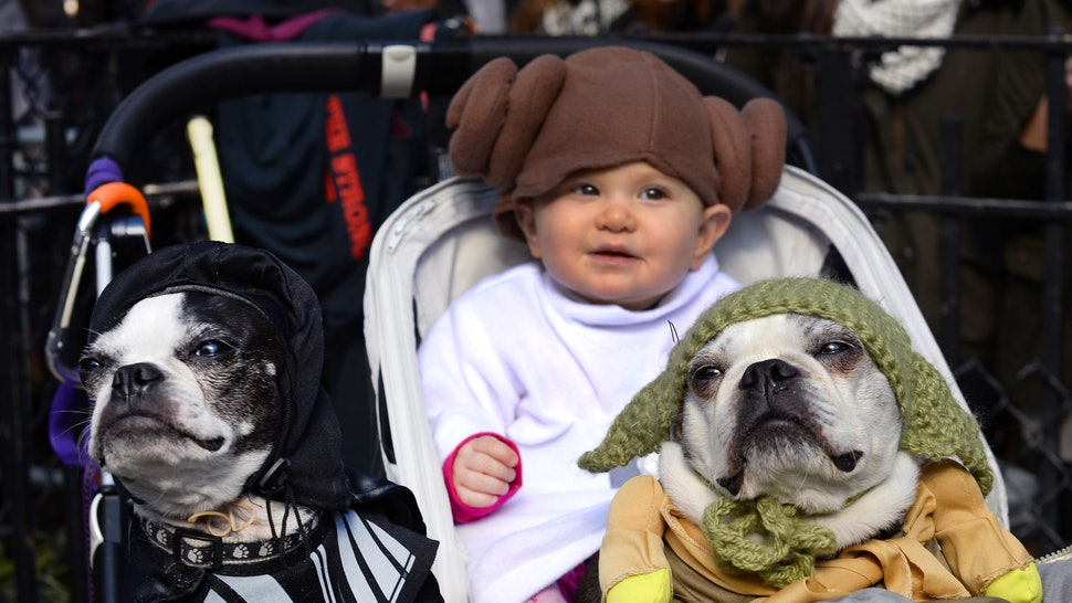 These Star Wars Pets Names Are The Cutest Thing To Ever Happen To