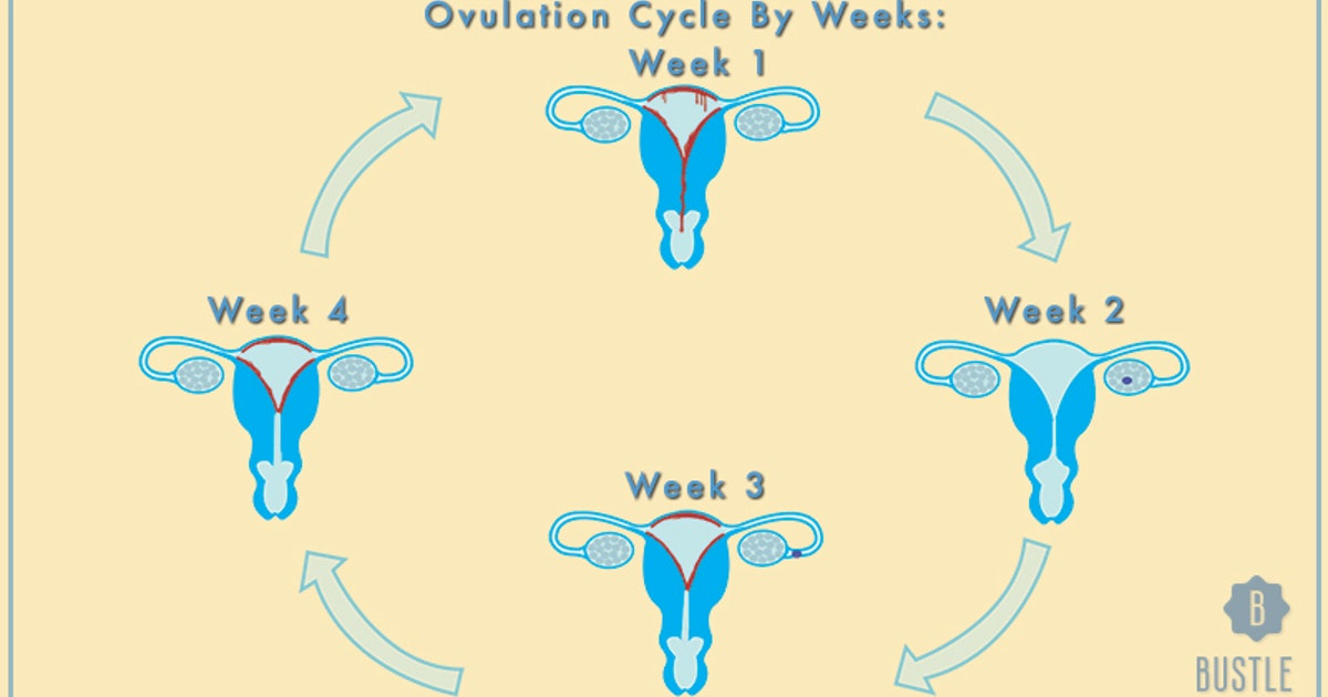 Horny during ovulation more The Kind
