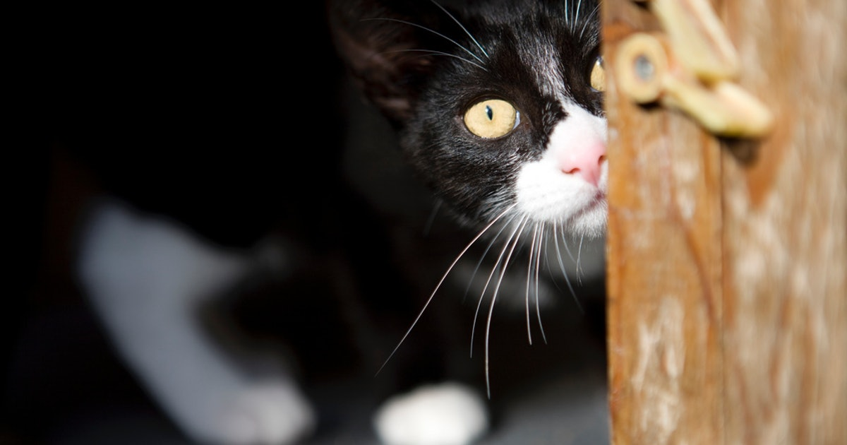 7 Things Cats Are Irrationally Afraid Of In Addition To Those